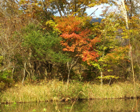 hakone-swamp-flower-garden