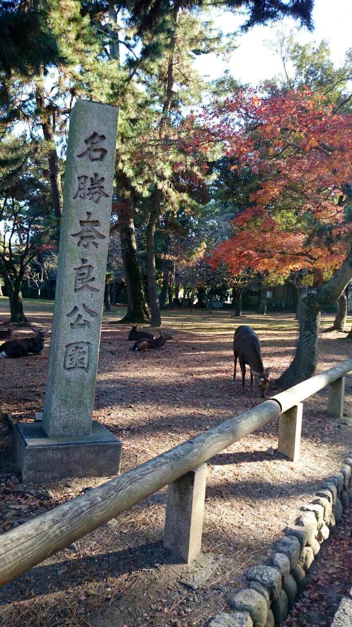 Nara-Park-27-1-8