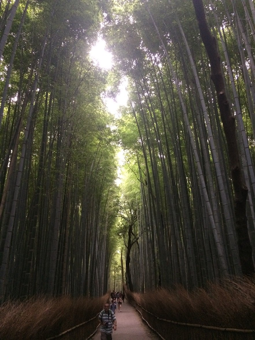 kyo-bamboo-forest-small