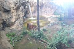 a-Ueno-Zoo-1
